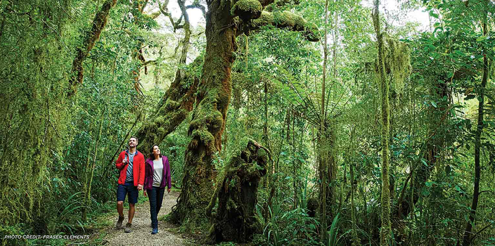New Zealand's Queen Charlotte Track & Marlborough Sounds